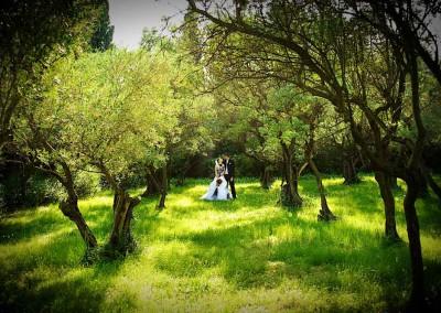mariage-dans-un-champ-d-oliviers