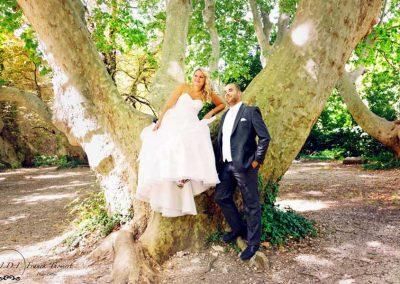 photographe tf arbre centenaire